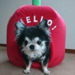 yo-chin のプロフィール写真